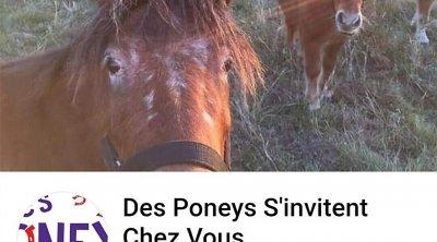 Des Poneys S'invitent Chez Vous